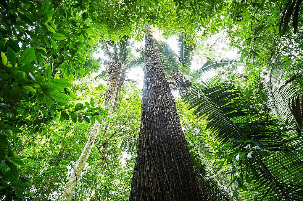 licenciamento-florestal-agroportal